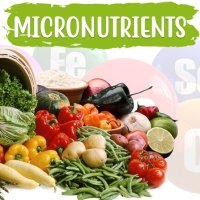 Micronutrients vs. Coronavirus (COVID-19)